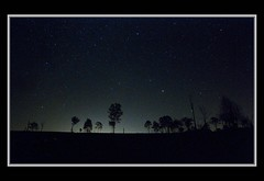 Star gazing over the horizon (SkattyKat) Tags: nightphotography trees light silhouette dark stars nikon horizon explore groups stargazing beaudesert bluedogphotographyworkshop nikond300s
