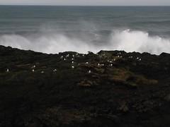 (Boyds Gallery) Tags: ocean sea seagulls storm rock oregon coast waves 122