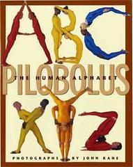 pilobolusAlph