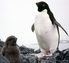880202 That's my Mum, I think (rona.h) Tags: 1988 antarctica february cloudnine palmerstation ronah