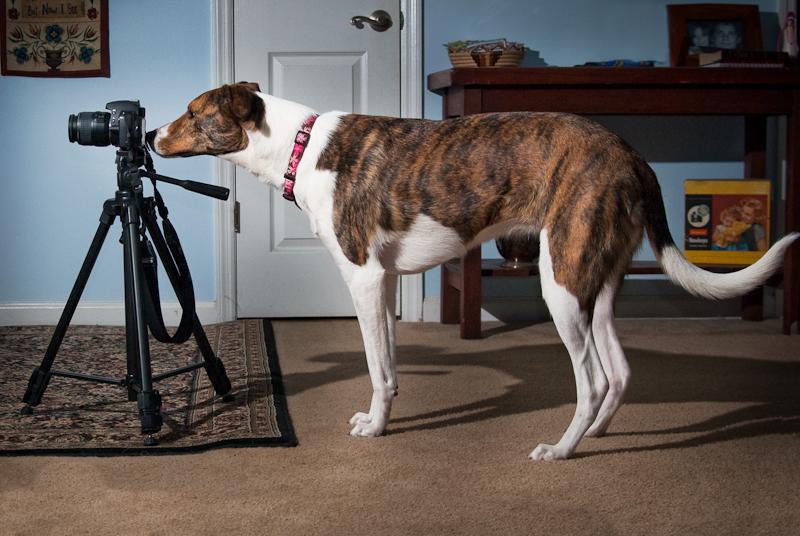 Day 107: Camera Dog