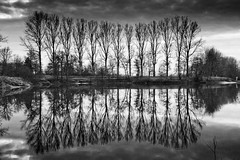 Tallesee (cpo-photography {C Owen}) Tags: trees lake reflection water germany deutschland mirror paderborn tallesee canon5dmkii