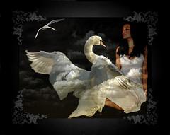 leda and the swan (Mara ~earth light~) Tags: photoshop swan creativecommons intuition poesie leda ourtime mythologie zeuss idream awardtree goldenart artistictreasurechest graphicmaster miasbest daarklands trolledproud mara~earthlight~ untouchabledream