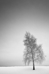 Schief (96dpi) Tags: schnee winter snow tree landscape one oneofakind eins minimal single lonely volkspark potsdam baum allein minimalismus einzeln bugapark