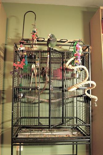 WC Pionus Cage