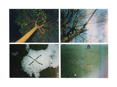 (Mastronardi) Tags: trees horses green nature 35mm italia 4x4 flash x diagonal breathe italie greenisthenewblack loveisagoodthing matteomastronardi pato oldlomoproduction promenadesavecmonpre ihaveatumblrnow randomlomocollection fujiexxtra400 canyoumisstheunknowed