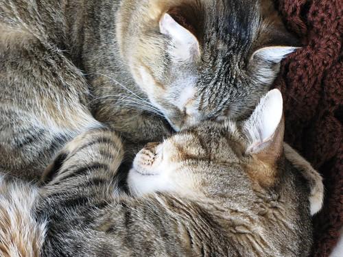 snuggling6