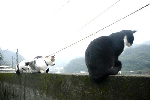 Street Cats in Taiwan