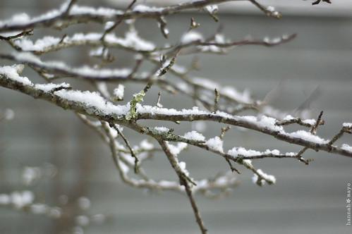 winter beauty, no.3