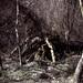 64/365 (Extra): Gnarled Tree
