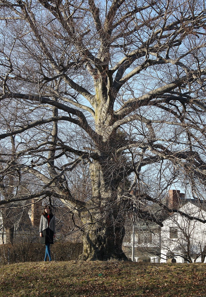 P tree 1