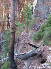 Do you see a trail in this photo?  Do you see Jake?  The big question is where is Leslie?  This is way into Fairyland.  Going down it looks impossibly steep.  It doesn't seem as bad coming out.