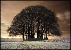 Overton Hill, Avebury (Ben Locke (Ben909)) Tags: longexposure trees winter megalithic monument grave field grass ir ancient infrared wiltshire beech barrow avebury neolithic tump tumblr