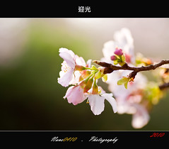 (Looking Sunny) (nans0410) Tags: lighting macro bokeh bloom sakura      fiower   nikond90 tamran90mm lookingsunny
