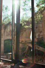(zapica) Tags: wood anna sun tree abandoned sol window arbol ventana smash madera mine break mina deserted lamina roto molar analogic analgico abandonado elmolar zapica zapico estivill annazapicoestivill
