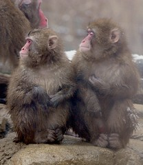 Japanese monkeys (floridapfe) Tags: two animal japanese zoo korea monkeys  japanesemonkeys