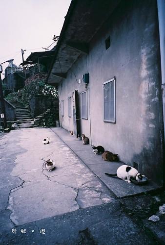 a cat town