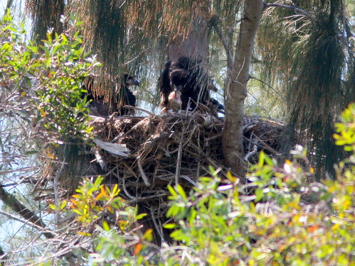 Three Eaglets 20100330