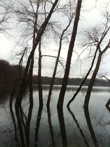 Trees in Water