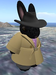 Enjah the Bunneh PI
