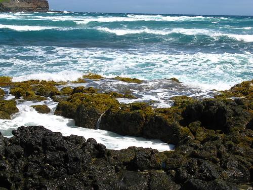 Mokolea, Kauai