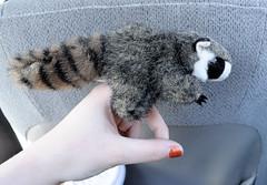 Finger (rape) raccoon puppet. (Zawezome) Tags: kids toy nikon puppet lol finger rape plush wrong raccoon wtf insert sodomy d5000