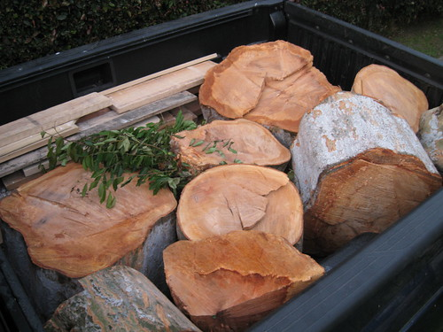 Chinese elm logs in back of truck