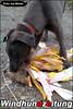 Windhunde-im-Frühling: Erstes Training in Sachsenheim