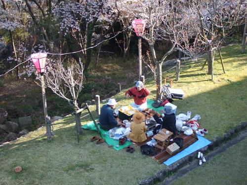大竹 亀居公園 桜 画像 14