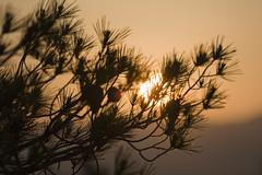 pine rise (Stavros Kammas) Tags: light sky sun sunrise canon dawn athens parthenon greece acropolis 450d filopapouhill