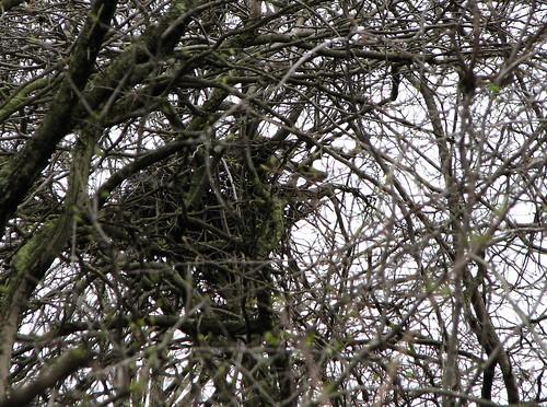 Hawthorn Tree Branch Hawthorn Tree Branch Bred