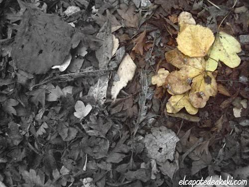 Cuando caen las hojas