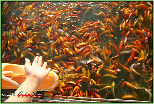 Fish Feeding and Boating in Nuvali-21