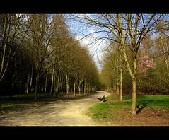 """Parc d'Aiseau (BrigitteChanson) Tags: arbres picturesque parc banc allée wallonie hainaut glaceries aiseau aiseaupresles 100commentgroup """"flickraward"""""""