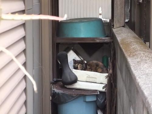 Today's Cat@2010-04-16