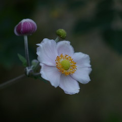 FlowerAndHalf