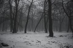 162 (AnkhaiStenn) Tags: wood winter snow tree green grass forest river stream russia ukraine russian ukrainian thunder ussr rovenki