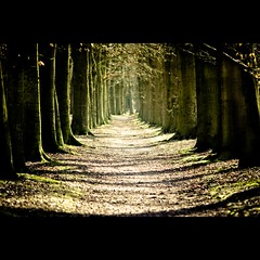 "Forest Alley - Bospad ""Kaapse Bossen"" (mikel.hendriks) Tags: trees forest landscape alley foto shadows doorn kaapsebossen path perspective pad nederland thenetherlands highcontrast tunnel explore photograph bos schaduw bushwalk frontpage landschap laan natuurmonumenten boswandeling lichtval bomenrij utrechtseheuvelrug nationaalpark bospad walkingroute canoneos50d wandelroutes sigma120400mmf4556apodgoshsm nationaalparkutrechtseheuvelrug forestalley naturemonuments nationalparkutrechthillridge"
