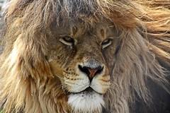 A wild and crazy guy!!! (WVDkiddz) Tags: animals spring wv westvirginia familyfun wildanimals prestoncounty wvdkiddz dkiddz hovatterszoo