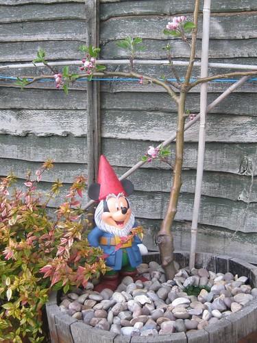 Gnome and blossom