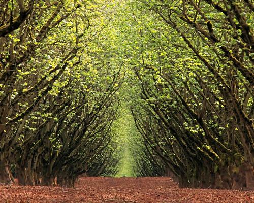 [フリー画像] 自然・風景, 道, 樹木, 森林, アメリカ合衆国, オレゴン州, 201005010100