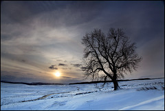 The Crows Nest (angus clyne) Tags: life winter light snow never tree home field work river dark hope scotland spring long flat earth farm hill fine perthshire glen croft crap tatties land ash moor scape planting ending drift pitlochry strath