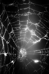 broken web (Tau Zero) Tags: broken spider web spiderweb cobweb spidersilk macromonday