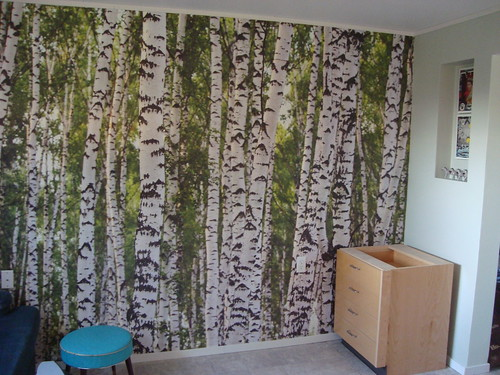 birch wall mural! finally up!