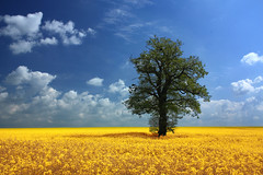 Field of sunlight - Woolmer Green