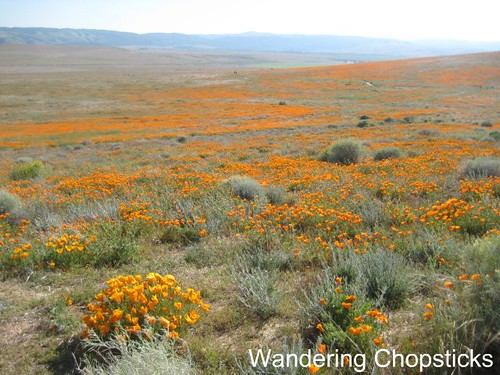 Antelope Valley California Poppy Reserve 4