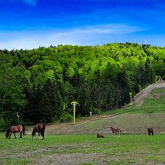 (Bojan Janjic) Tags: blue sky horse green nature landscape nikon super 1750 tamron luka cpl hmc banja hoya bojan bosna nebo borja d90 doboj bilora konj pejsaz konji janjic teslic