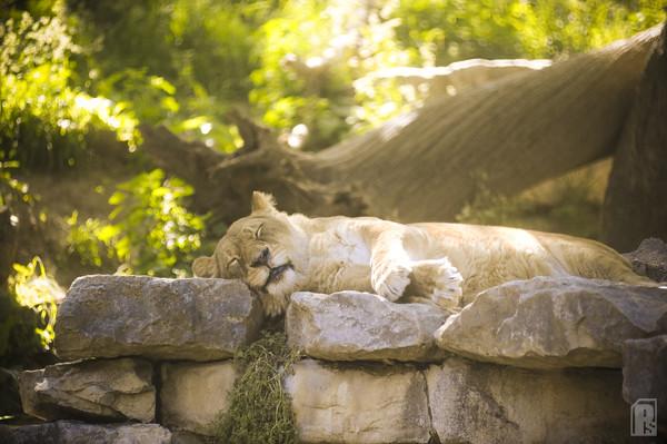 Sleeping Glow Coverkiller Tags Animal Zoo Nikon Omaha D3