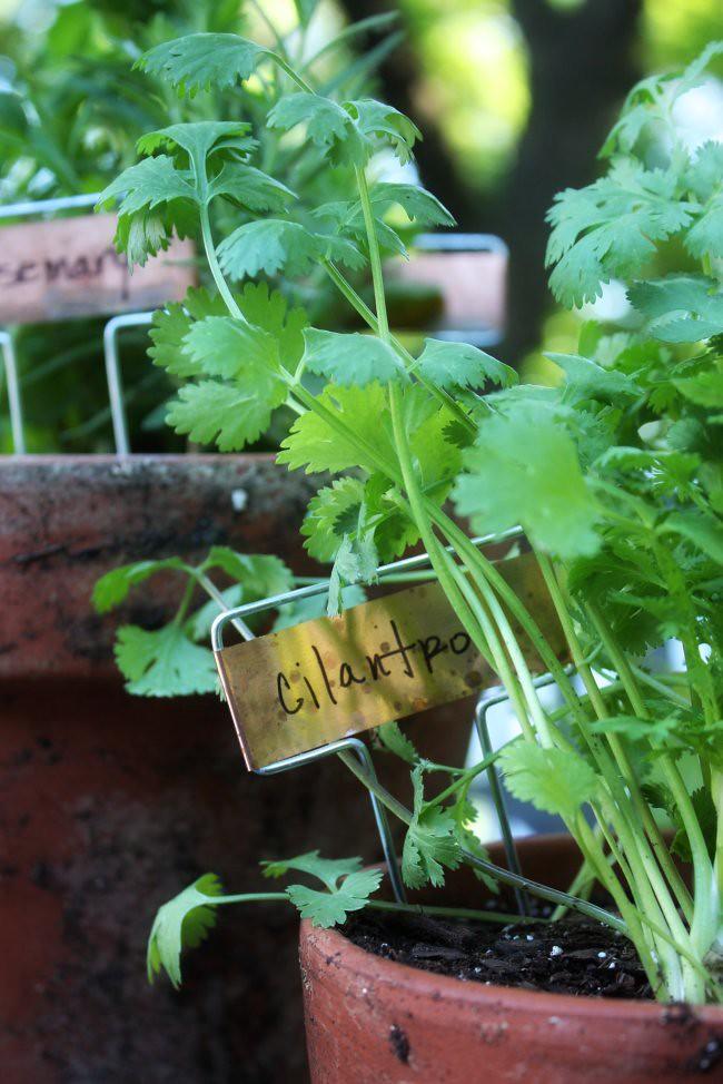 may herbs 2010