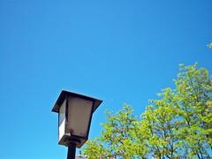 A por el cielo (Unnai) Tags: verde azul arbol farola arboles cielo eaulea